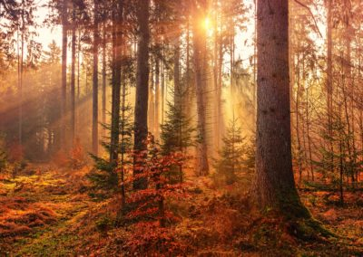 Fotografie-Arten: Landschaftsfotografie