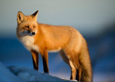 Fotografie-Arten: Tierfotografie