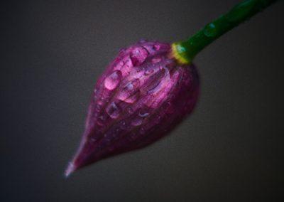 Fotografie-Arten: Makrofotografie